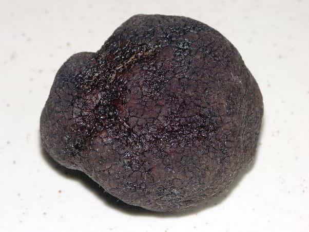 Melanosporum