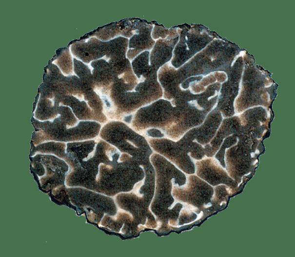 Scansione Brumale Vittadini (dettaglio gleba)