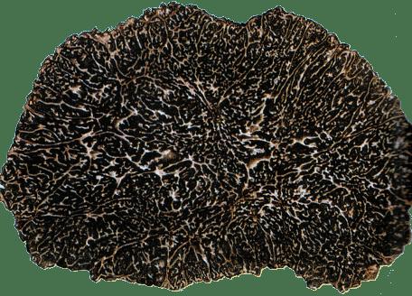 Tuber Melanosporum Vittadini (Gleba)-min