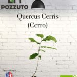 Vetrina Quercus Cerris