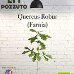 Vetrina Quercus Robur