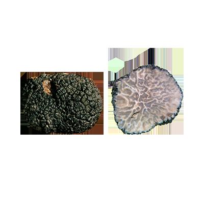 Tuber Brumale v. moscatum