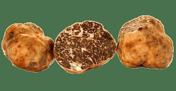 tartufo-bianchetto